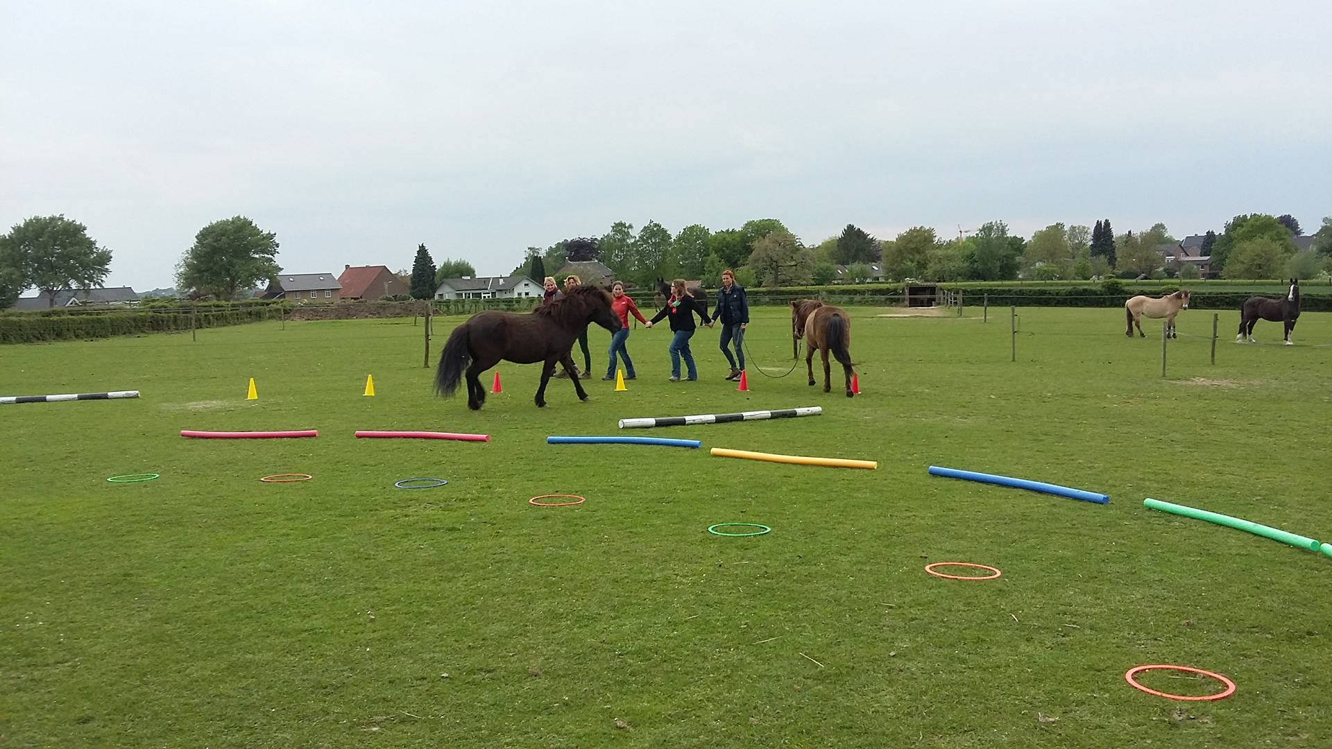 Paardencoaching - Horse4life