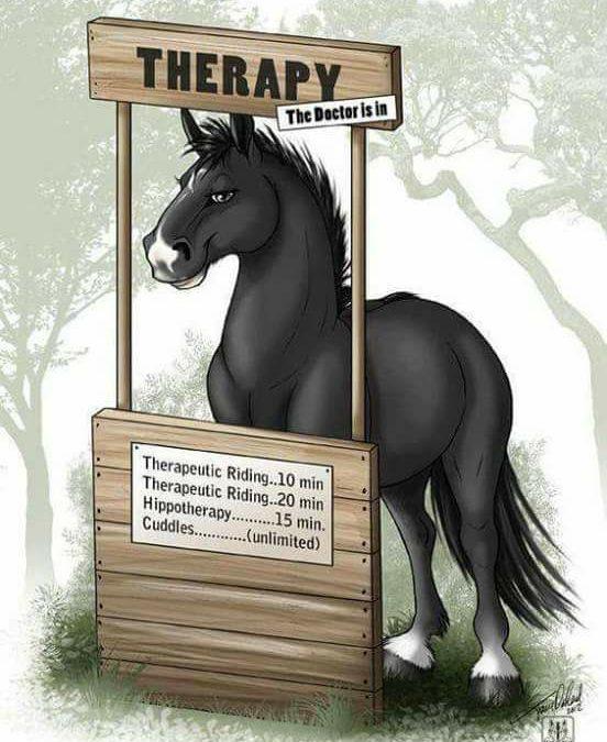 Wat doe jij nou eigenlijk met 'die paarden'?